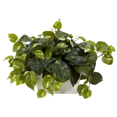 jcpenney.com | Pothos With White Wash Planter Silk Plant