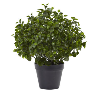 "jcpenney.com | 23"" Peperomia Plant UV-Resistant Indoor/Outdoor"