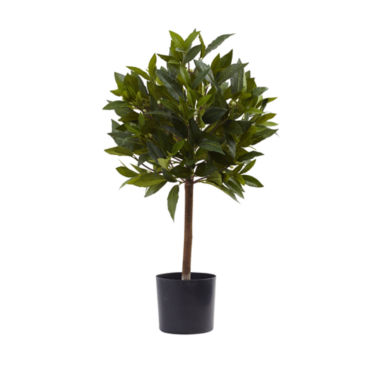 jcpenney.com | 2' Sweet Bay Mini Ball Topiary