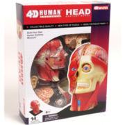 4D-Vision Human Head Anatomy Model