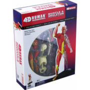4D-Human Muscle & Skeleton Anatomy Model