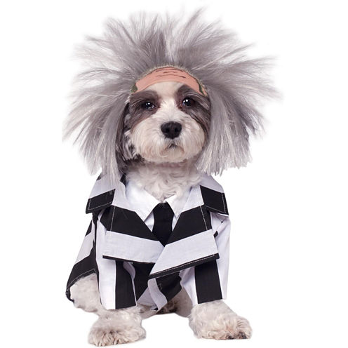Beetlejuice Costume For Pets - Large