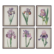 Set of 6 Iris Beauties Framed Wall Art