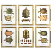 Set of 6 Tortoise Study Framed Wall Art