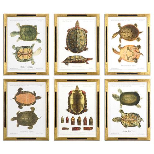 Set of 6 Tortoise Study Framed Wall Art