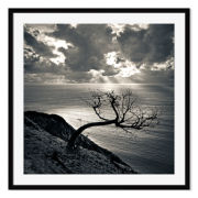 Dead Tree Sunset Framed Print