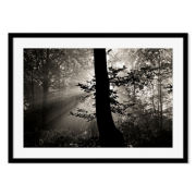 Into the Beautiful Framed Print