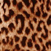 Spotted Cheetah/bl