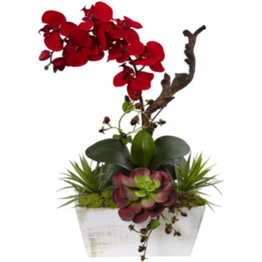 jcpenney.com | Nearly Natural Seasonal Orchid & Succulent Garden With Planter