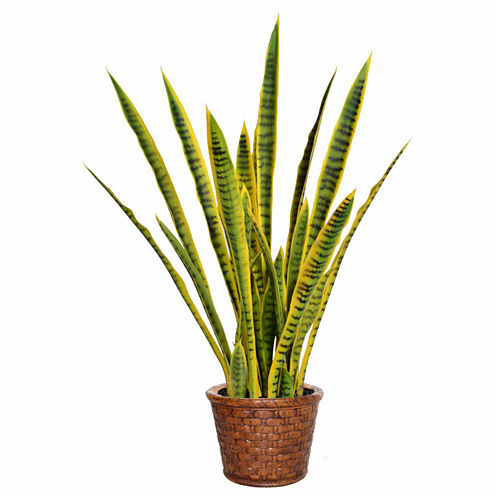 40 Inch Tall Snake Plant In Basket Weave Pattern Planter