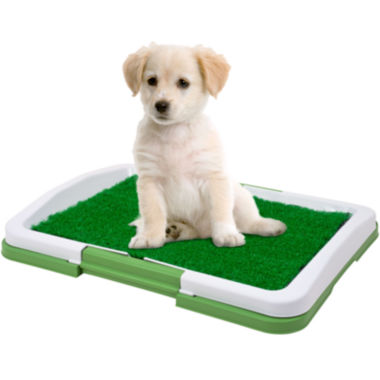 jcpenney.com | PAW™ Puppy Potty Trainer