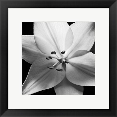 White Lily Framed Wall Art