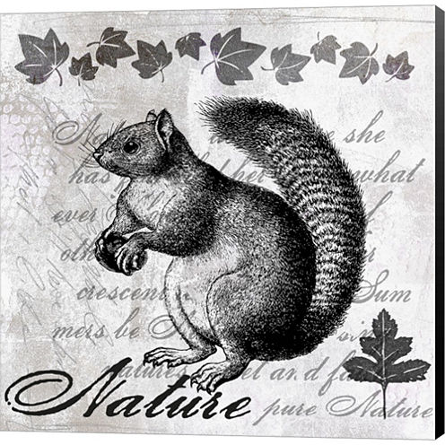 Squirrel II Gallery Wrapped Canvas Wall Art On Deep Stretch Bars