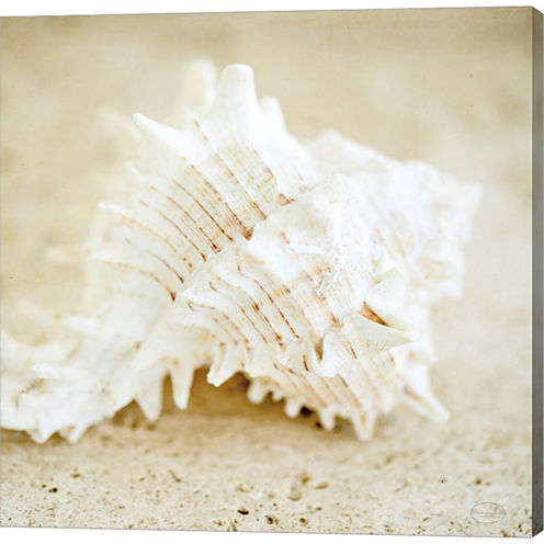 Seashore Shells II Gallery Wrapped Canvas Wall ArtOn Deep Stretch Bars