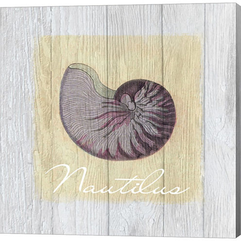 Vintage Shells 3 Gallery Wrapped Canvas Wall Art On Deep Stretch Bars
