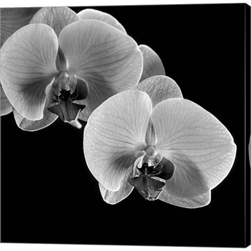 Orchids Gallery Wrapped Canvas Wall Art On Deep Stretch Bars
