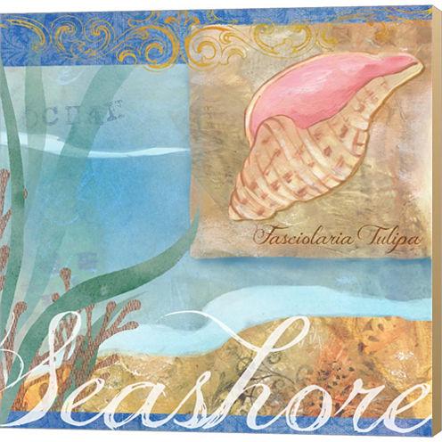 Seashells I Gallery Wrapped Canvas Wall Art On Deep Stretch Bars
