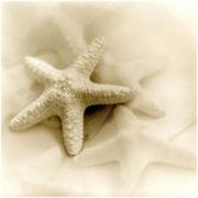 PTM Images™ Sea Shell I Canvas Wall Art