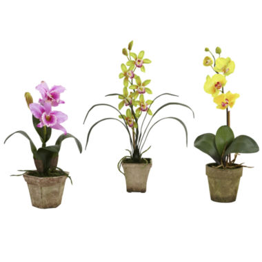 jcpenney.com | Potted Set Of 3 Orchid Mix