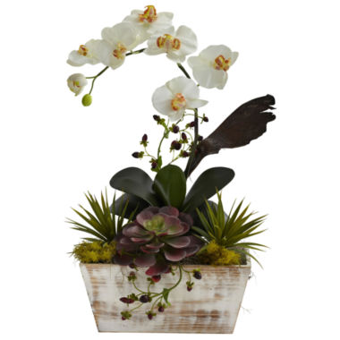 jcpenney.com | Orchid & Succulent Garden With White Wash Planter