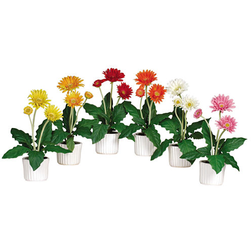 Gerber Daisy With White Vase Set Of 6