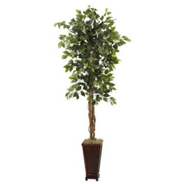 jcpenney.com | 6.5' Ficus With Decorative Planter