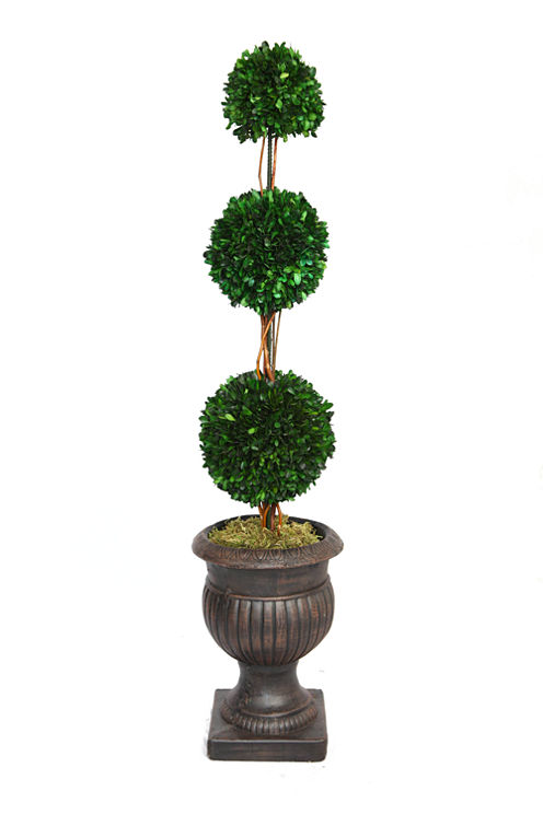 44 Inch Tall Triple Balls Preserved Boxwood Arrangement With Pot