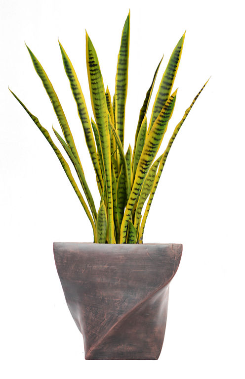 45 Inch Tall Snake Plant In Modern Planter