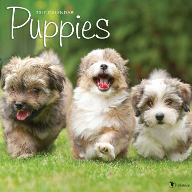 jcpenney.com | 2017 Puppies Wall Calendar