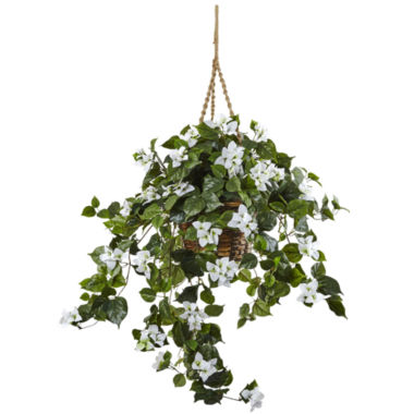 jcpenney.com | Bougainvillea Hanging Basket