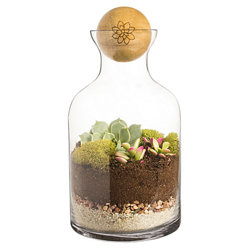 Cathy's Concepts  56 oz. Glass Succulent Terrarium with Wood Ball