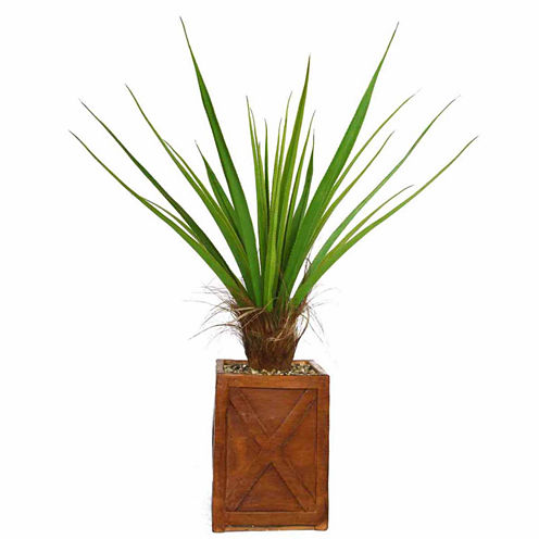 53 Inch Tall Agave Plant With Cocoa Skin In 13 Inch Planter
