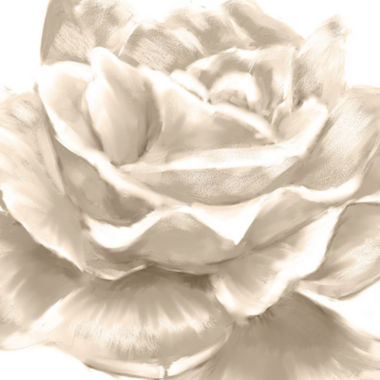 jcpenney.com | PTM Images™ White Roses II Wall Art