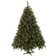 6½' Aberdeen Tree