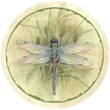 jcpenney.com | Thirstystone® Dragonfly Set of 4 Coasters