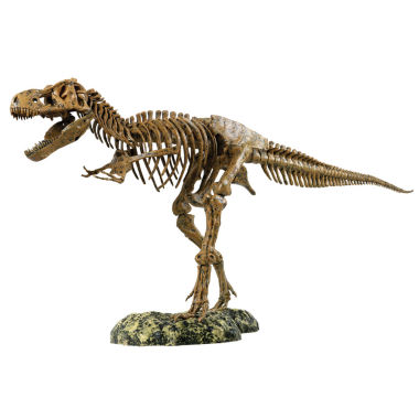 jcpenney.com | Discovery Toy Elenco Trex Skeleton
