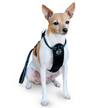 jcpenney.com | K & H Manufacturing Travel Safety Harness