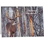 Legendary Christmas Cards (12 Pack)