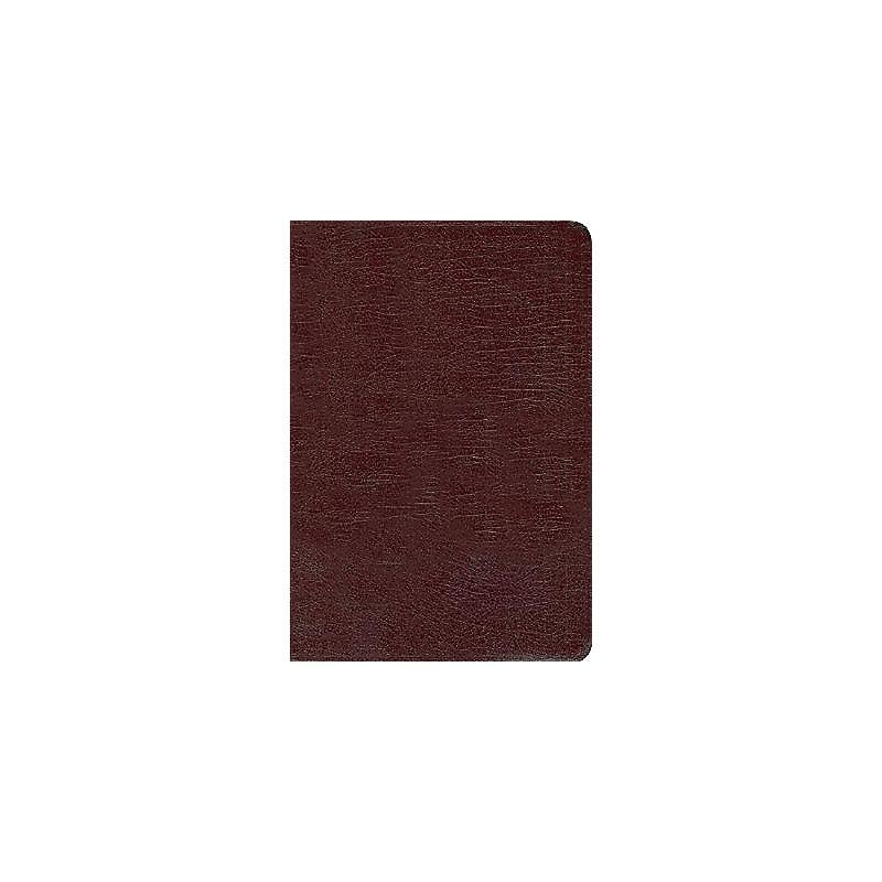 NIV Compact Thinline Bible (Burgundy)