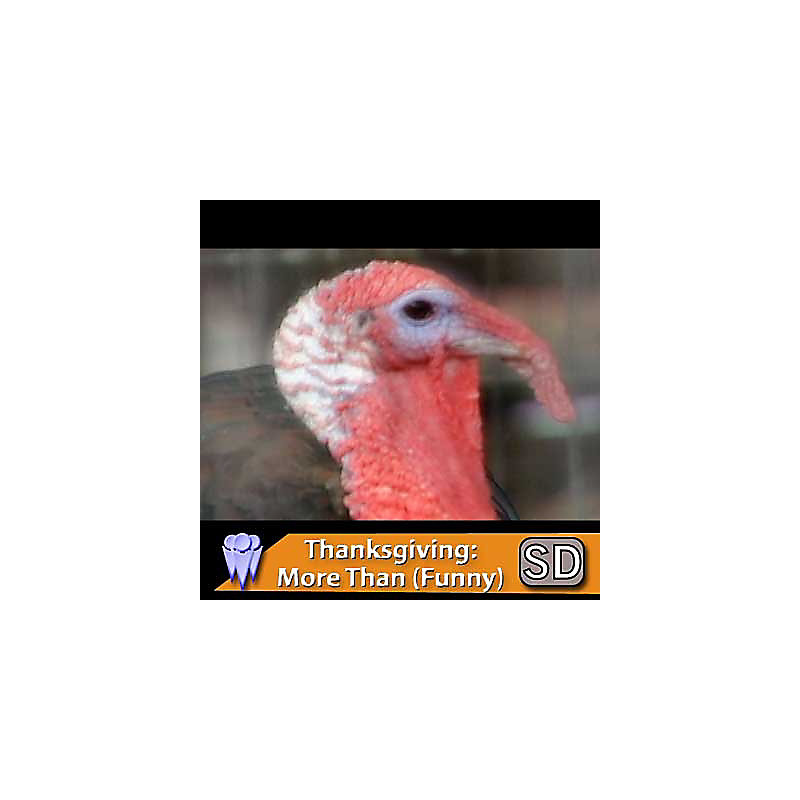 Thanksgiving: It's More Than Turkey or Football ? (funny) (Video Download)