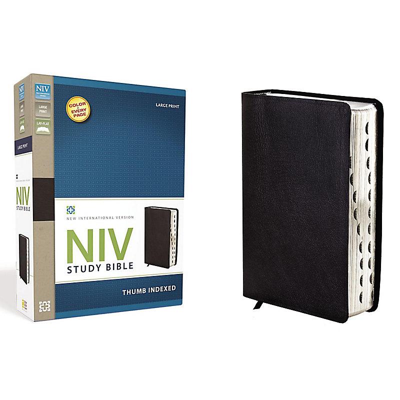 NIV Study Bible, Large Print