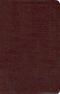 New Women's Devotional Bible-NIV                                                                                                                       (Burgundy)