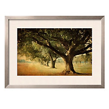 "Framed 43"" x 32"" Island Oak Print by William Guion, ARS-10305"