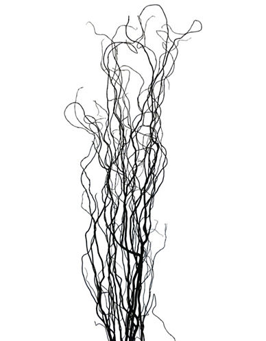 Woodland Botanicals Red Curly Willows-BLACK-One Size