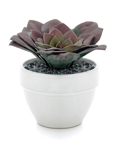 Torre And Tagus Designs Potted Faux Echeveria Succulent-PLUM-One Size