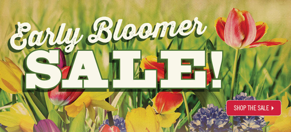 Shop The Early Bloomer Flyer