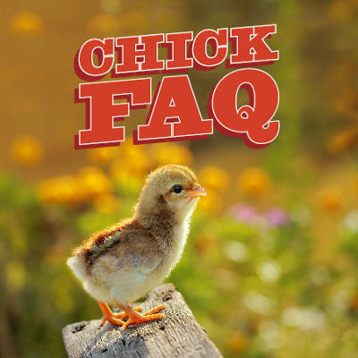 Chicks FAQ