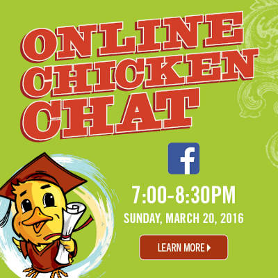Online Chicken Chat