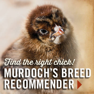 Chicken Breed Recommender