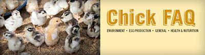 Chick FAQ